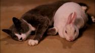 Unbreakable Kimmy Schmidt_Bunny _ Kitty_S2E4